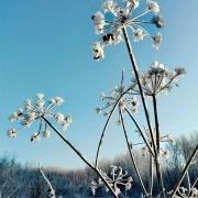 wintersilhouet