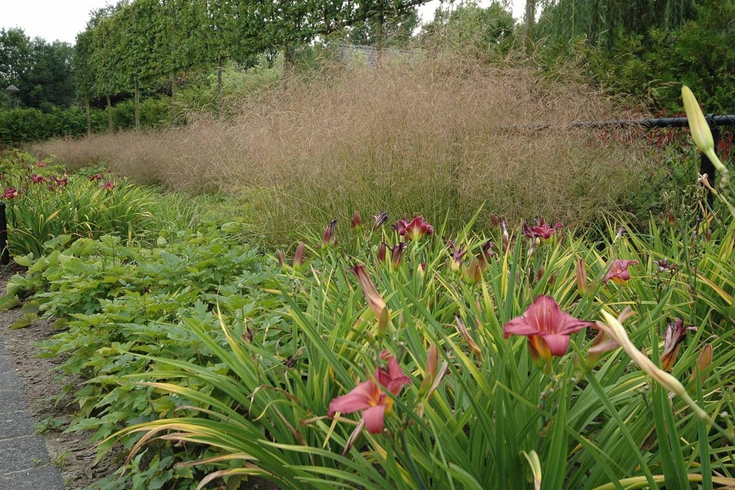 Exclusieve tuin met bloemen